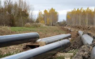 welded gas line pipelines crossing a black poplar forest in a cloudy day.