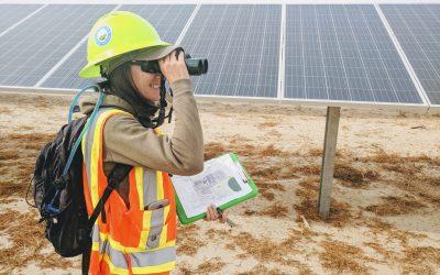 solar field work